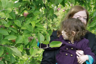 Apple Picking in Central Massachusetts