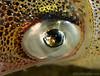 squid eye