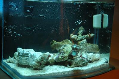 Pico Reef 9/9/2007