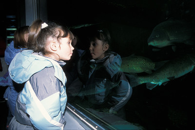 © Joseph Dougherty. All rights reserved.  Child looking into the glass of an aquarium.