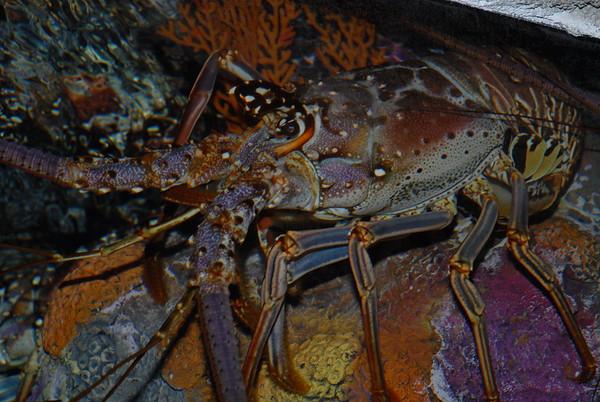 Crustaceans (Crabs, Lobsters, Shrimp, etc.)