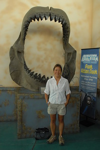 © Joseph Dougherty. All rights reserved.  Megalodon jaw replica.