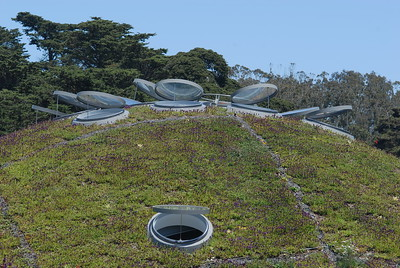 © Joseph Dougherty. All rights reserved.  California Academy of Sciences, living roof in bloom. Skylight windows and ventilation.