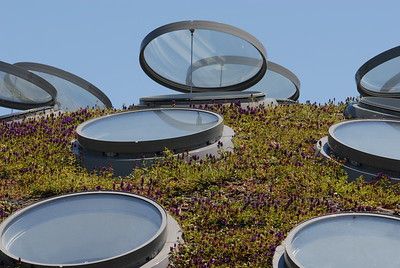 © Joseph Dougherty. All rights reserved.  California Academy of Sciences, living roof in bloom. Skylight windows and ventilation.  Self-heal is the dominant plant.