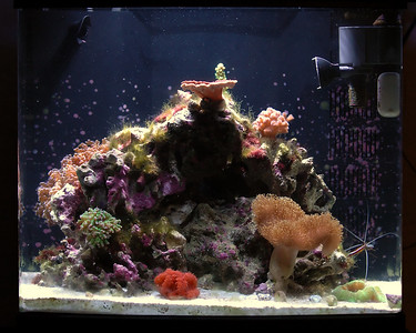 Reef Tank 7/18/2007