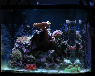 Reef Tank 10/25/2007