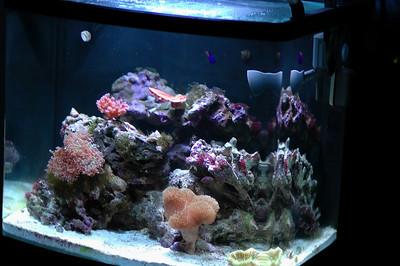 Reef Tank 5/25/2007