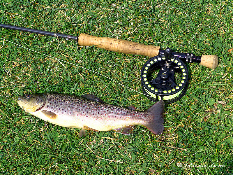 One of my Bigger Trout so far.<br /> Taken April 2005 with my Sony 828.