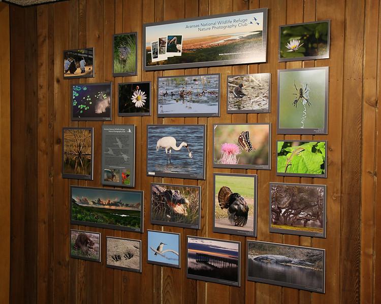 Photography Club display, Aransas NWR, 10/09/10.
