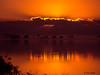 Sunrise, Lake Texana, 11/1995.