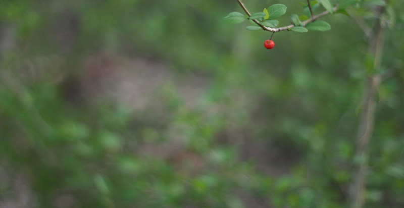 Two days before Spring officially started, this lone berry was hanging on.