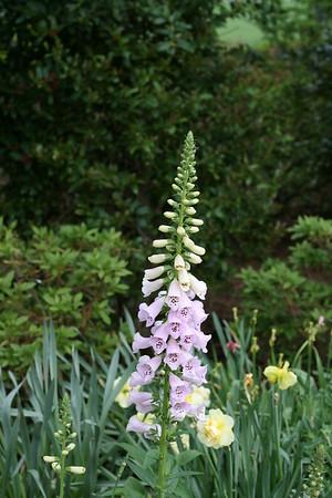Arboretum April 2008