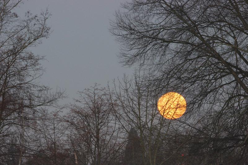 Winter moon setting