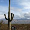 Saguaro NP saguaro 1