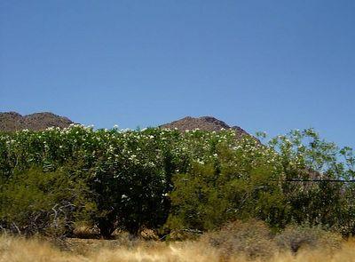 Arizona-Camelback Mountain-June 2005