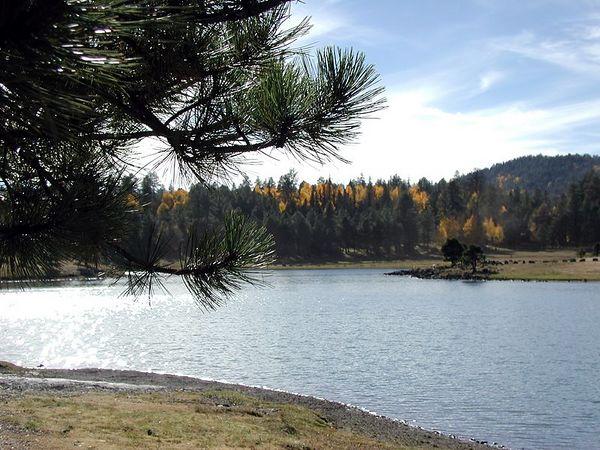 Fall Colors at Lake Hawley in Pinetop, AZ (PA150 (14)-LakeHawley-PineLook-FallFoilage-Aspen&Pine-2 copy.jpg)