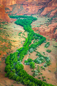 Canyon de Chelly Tree Procession
