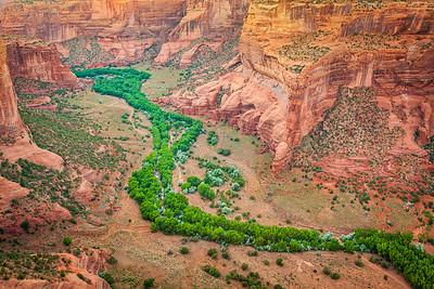Marching Trees at Canyon de Chelly