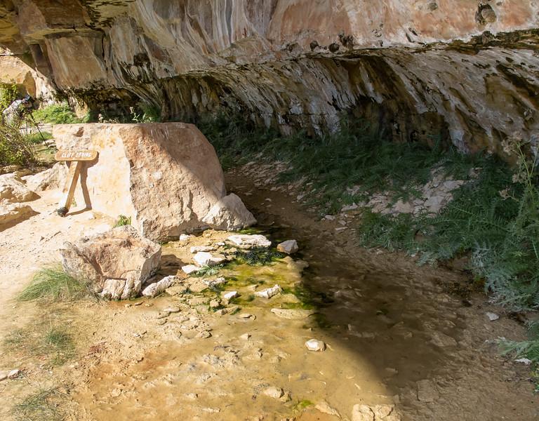 Cliff Spring Trail<br /> Grand Canyon National Park North Rim Arizona