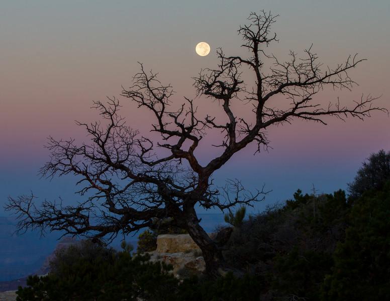Cape Royal Moonset<br /> Grand Canyon National Park North Rim Arizona