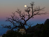 Cape Royal Moonset<br /> Grand Canyon National Park North Rim Arizona