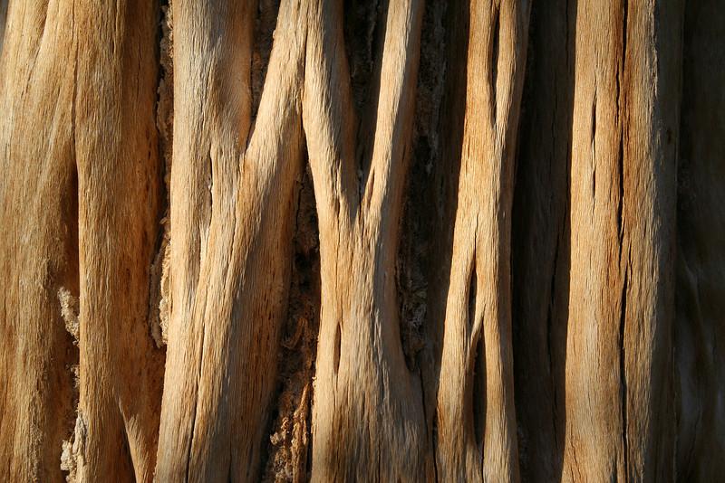 The inside of a dead cactus, Saquaro National Park.