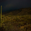 Incoming storm at Saguaro National Park, AZ.