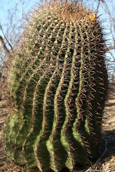 Short cactus.