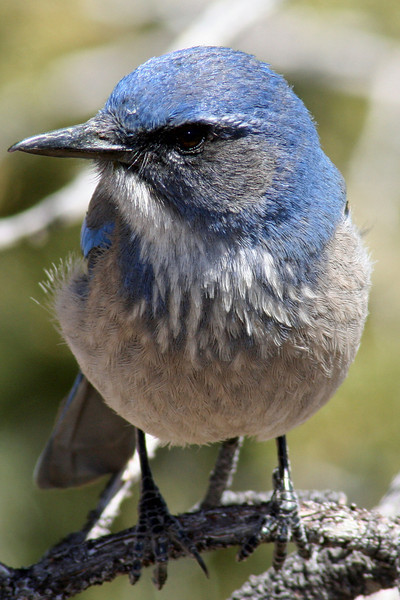 Bird at the Grand Canyon.
