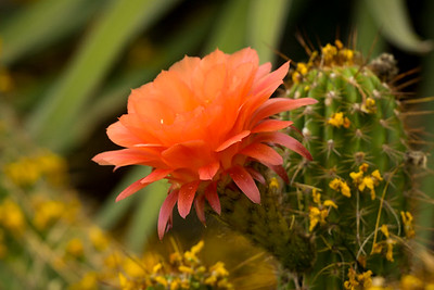 10 Harold_Cactus Flower_RAW_MG_6827