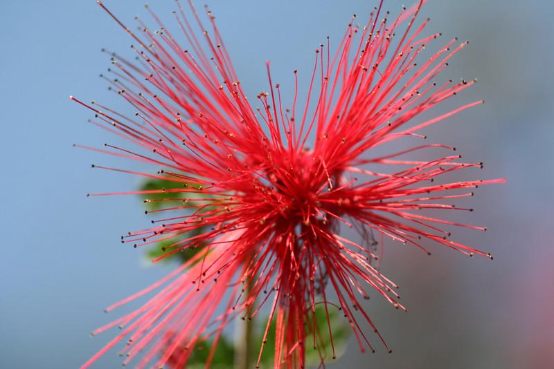 Cool looking flower.