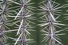 Macro shot of a cactus.