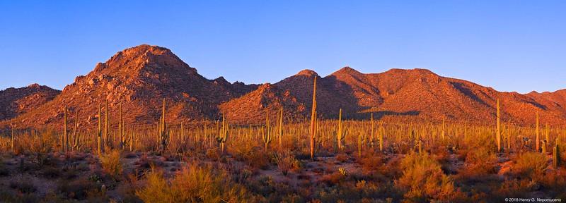 Saguaro National Park, Tucson, AZ