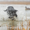 """Scout"" retrieving"