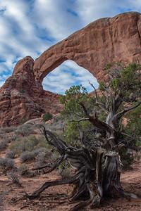Arches National Parkarches national park moab utah windows blue hour sky big mountains snow dead trees vistas