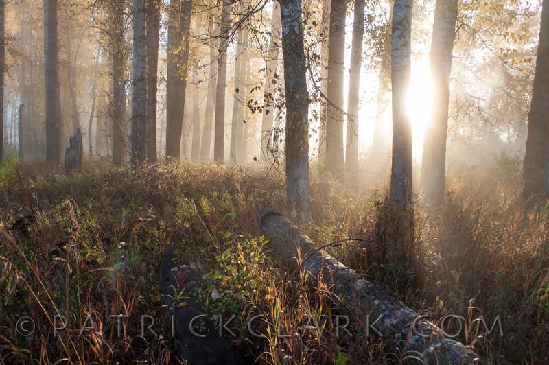 Cottonwood Fog