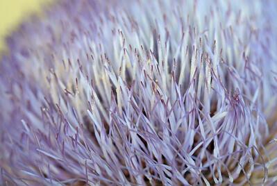 9504 Artichoke Blossom