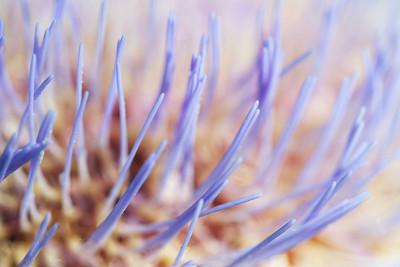 9064 Artichoke Blossom
