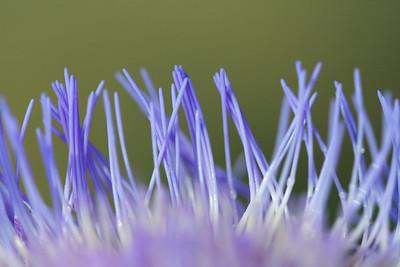 9070 Artichoke Blossom