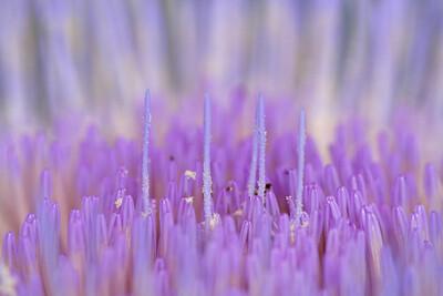8982 Artichoke Blossom