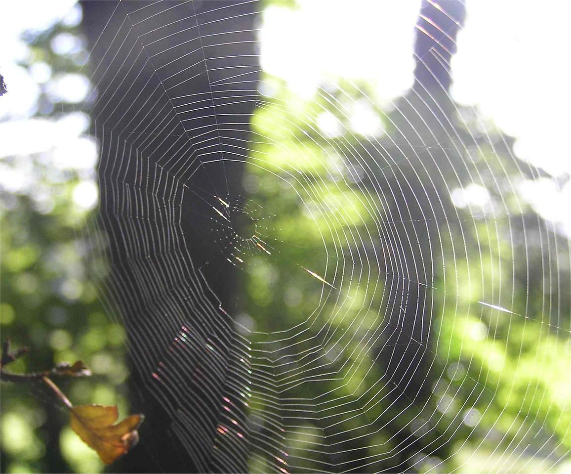 Spiders web , Hugenden Aug 2005