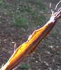 Sun on bark, Flackwell Heath Aug 2005
