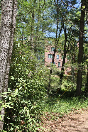 abuts the UNC Asheville campus - many paths for students to use into the gardens