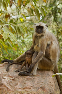 Baby Monkey and mother.