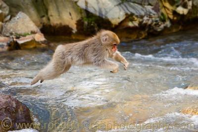 """If Monkeys Could fly"" - Award Winner"