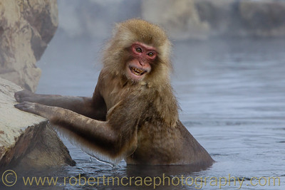 """Lovely Macaque in the Bath"" - Multiple Award Winner"