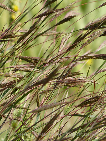 Taupe Tall Grass Against Lime Green