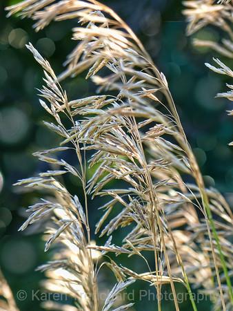 Tall Grass Fall