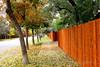 City Sidewalk Fall