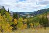 Fall aspen , Eldora, CO